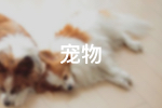 西丽Beautiful Dog宠物美容会所